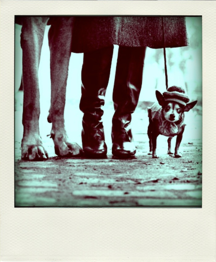 """Dog Dogs"" di Elliott Erwitt"
