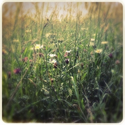 Progetto Hipsta: Leaves, trees, grass and flowers